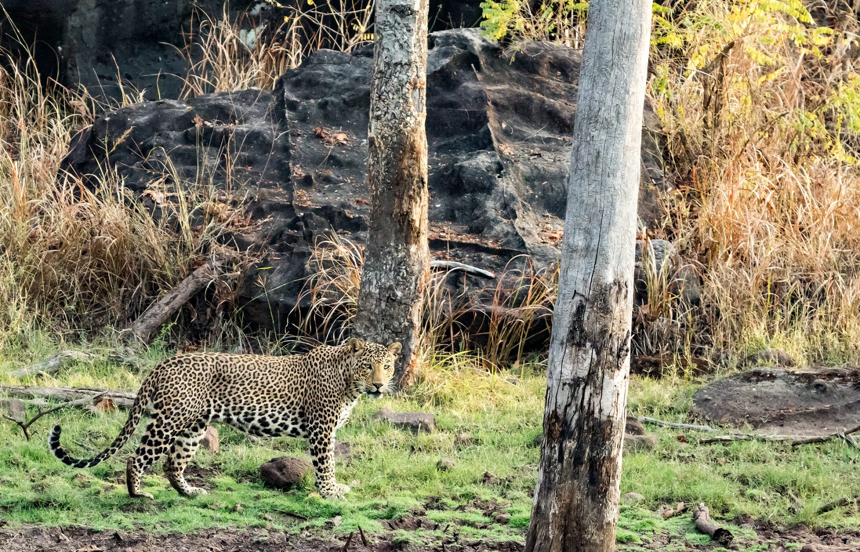 Satpura National Park, India.