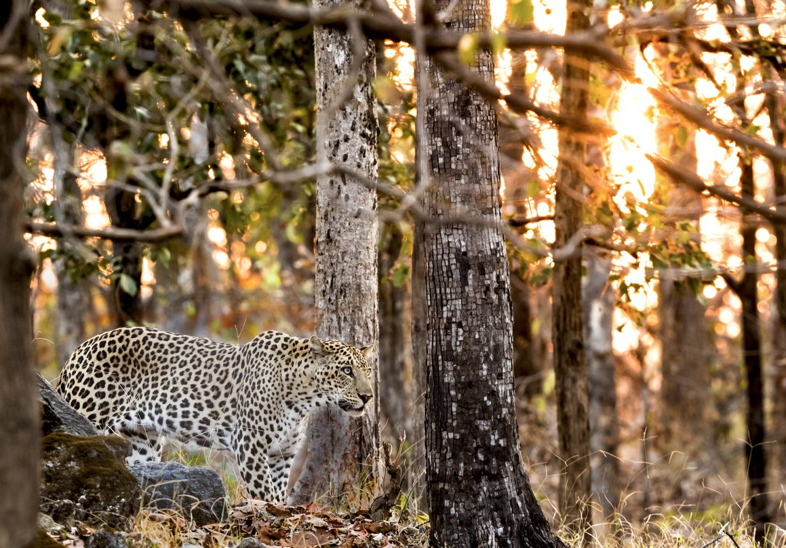 Pench National Park, India.
