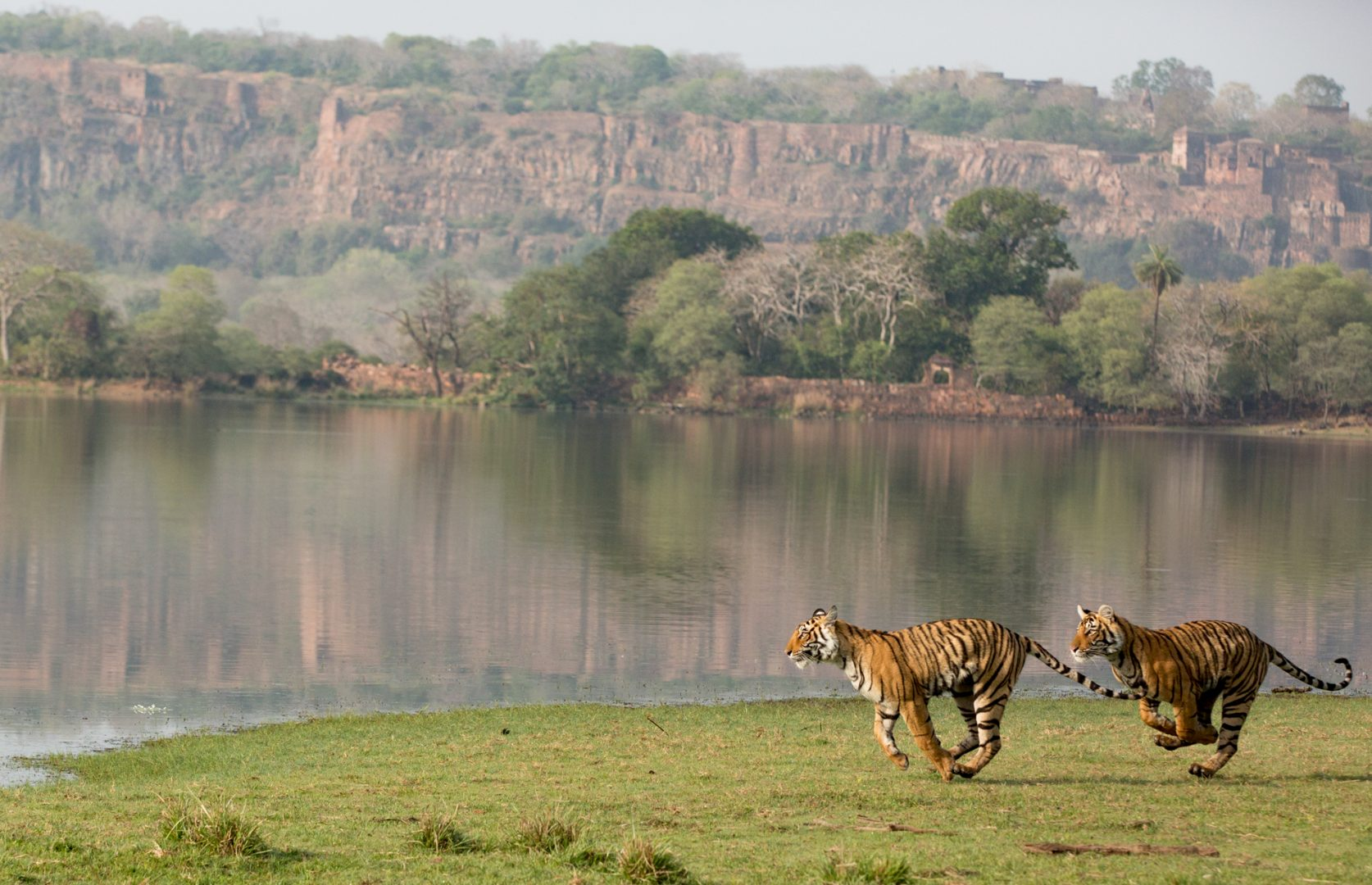 Ranthambhore Tiger Reserve, India.