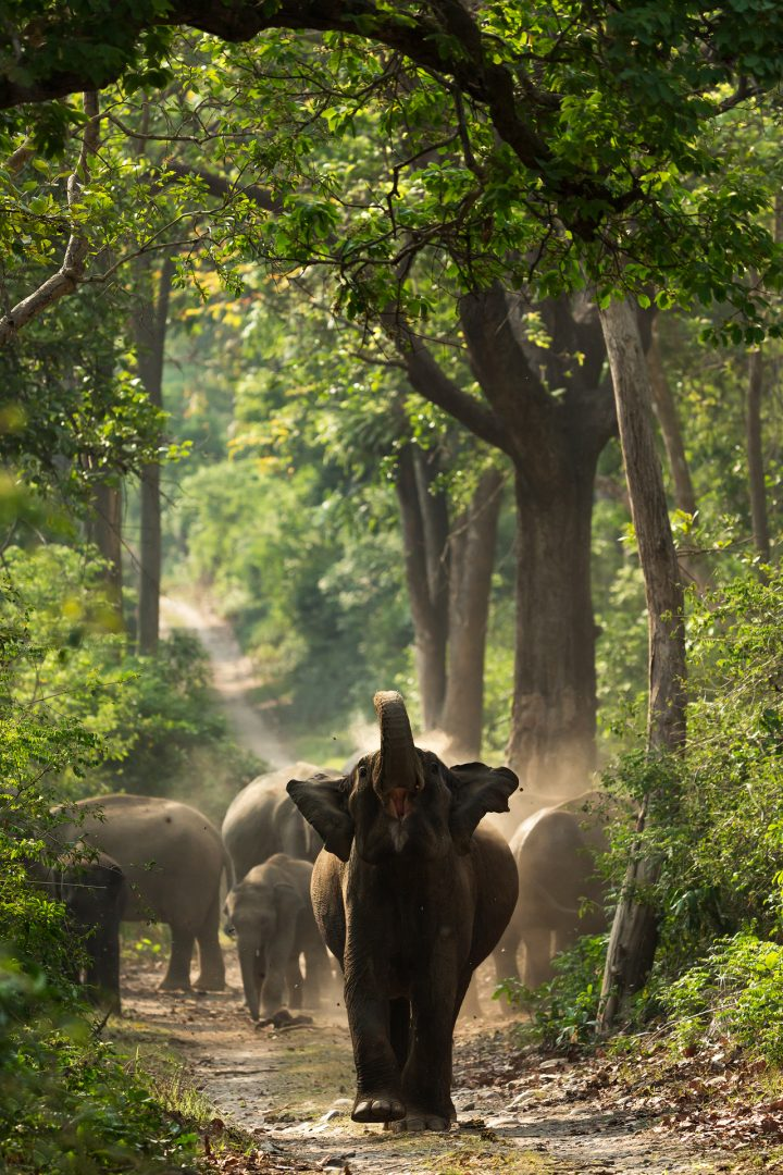 Corbett Tiger Reserve, India.